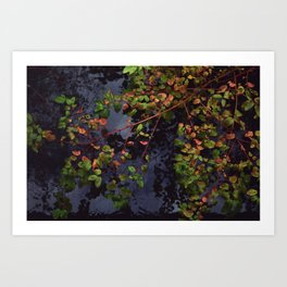 Scarlet and Green Art Print