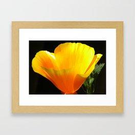 Glowing poppy Framed Art Print
