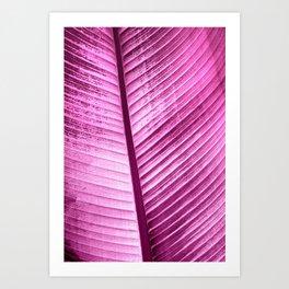 Maurelli Fuchsia Banana Tree Leaf Art Print