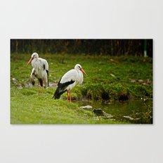 Birds in the rain Canvas Print