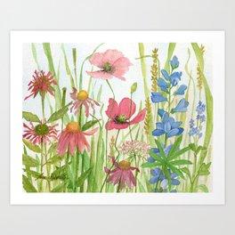 Watercolor Garden Flower Poppies Lupine Coneflower Wildflower Kunstdrucke
