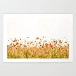 California Poppies Art Print
