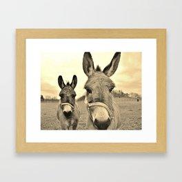 Miniature Donkeys X 2 Framed Art Print