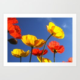 Happy Poppies Art Print