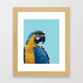 Macaw photograph | Macaw digital art print Framed Art Print