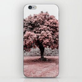 Dzibilchaltun Tree iPhone Skin