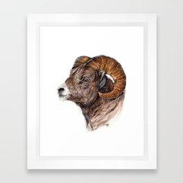 Watercolour Ram  Framed Art Print