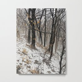 Winter at the park Metal Print