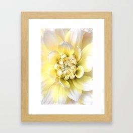 Dahlia in Bloom Framed Art Print