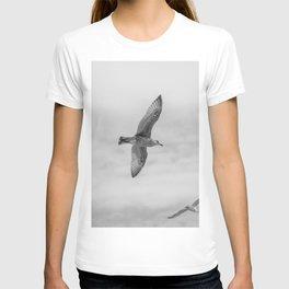 seagull in grey T-shirt
