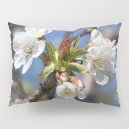 Cherry Blossom In Spring Sunlight Pillow Sham