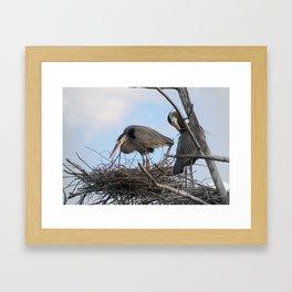 Great Blue Herons Nesting Framed Art Print