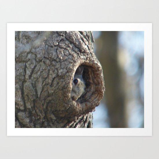 Peek A Boo Squirrel 2014 Art Print