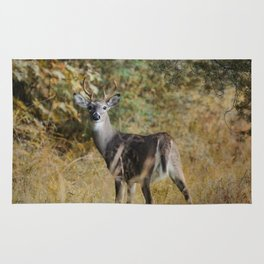 Buck in Autumn Rug