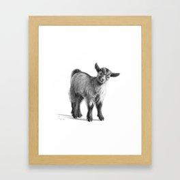 Goat baby G097 Framed Art Print