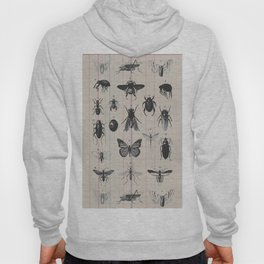 Vintage Insect Study on antique 1800's Ledger paper print Hoody