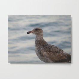 Young Gull in Malibu Metal Print