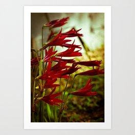 Oxblood Lily Art Print