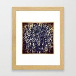 Fall devoided of leaves Framed Art Print