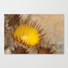 Desert Flower 159 Canvas Print