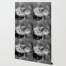 Bokehlicious black & white dandelion Wallpaper