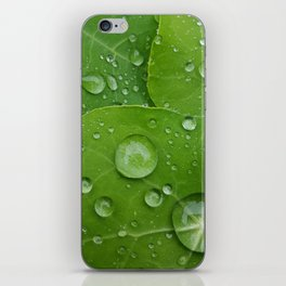 Dewdrops on Morninglory iPhone Skin