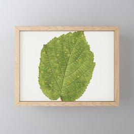 Vintage hazelnut leaf Framed Mini Art Print