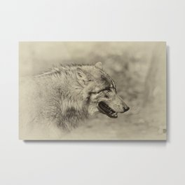 lonesome wolf Metal Print