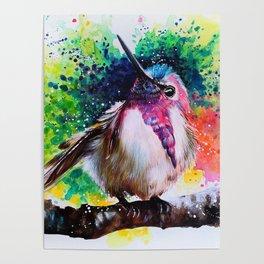 Costa's Hummingbird Acrylic Painting Poster