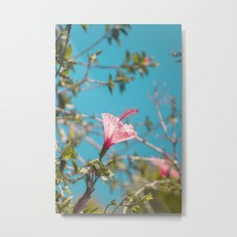 Pink Flower Metal Print