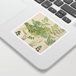 Maidenhair Ferns Sticker