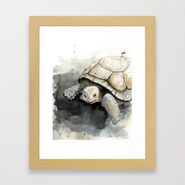 Gopher Tortoise Framed Art Print