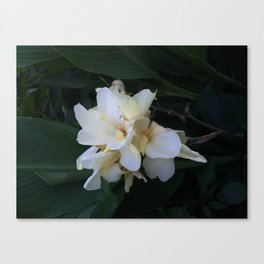Flower in Central Park garden Canvas Print