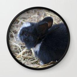 Black baby rabit in the hay AN02 Wall Clock