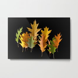Variety coloured autumn oak leaves Metal Print