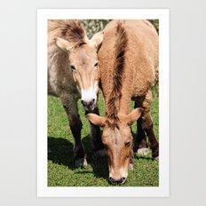 Przewalski Horses Art Print