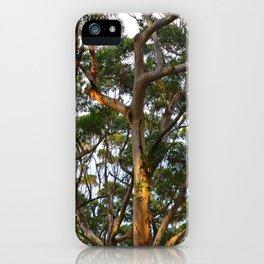Gum Trees iPhone Case
