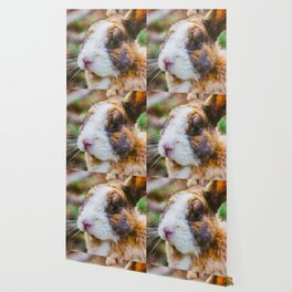 Rabbit in a natural park on the French Riviera Wallpaper