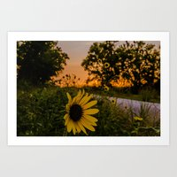 sunflower at Sunset Art Print