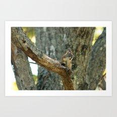 Brown Squirrel Art Print