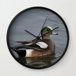 American Wigeon - Male Duck Wall Clock