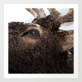 Watercolor Elk Bull 73, Estes Park, Colorado, Close Up Art Print