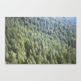 Island Forest Canvas Print