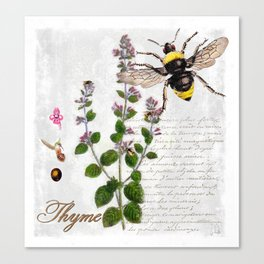 Cottage Style Thyme, Bumble Bee, Hummingbird, Herbal Botanical Illustration Canvas Print