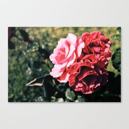 Flowers/ Rome Canvas Print