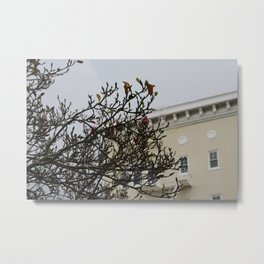 Photograph of a pink and white blossom tree in front of a light yellow San Francisco house Metal Print