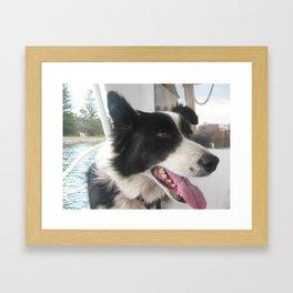 boating dog Framed Art Print