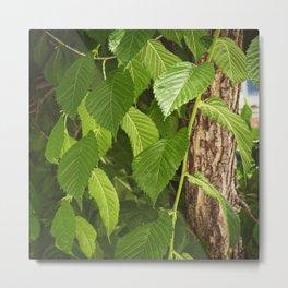 green leaves in springtime Metal Print