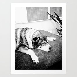 Lily at rest Art Print