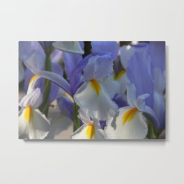 Irises in Blue and White Metal Print